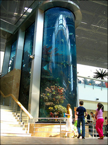 The tallest marine aquarium in the Baltic states